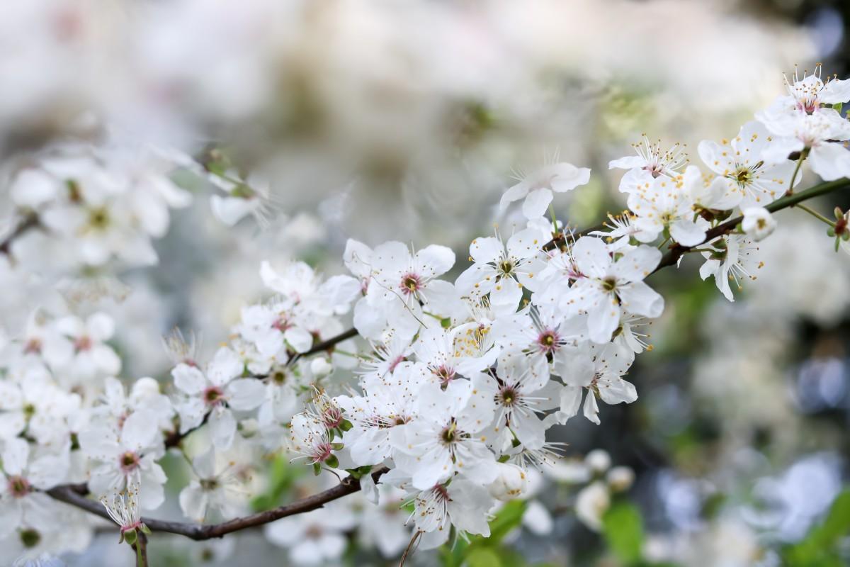 Frühling, Blüten, weiß, Blooms, Spring
